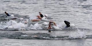 De zwemmers van Triathlon stock foto's