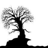 Dead Abstract Tree Royalty Free Stock Photo