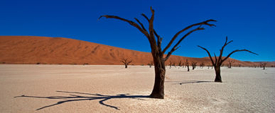 Dead Acacia Trees. Namib Desert, Namibia Royalty Free Stock Photography