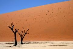 Dead Acacia Trees At Dead Vlei, Namib Desert Royalty Free Stock Photo