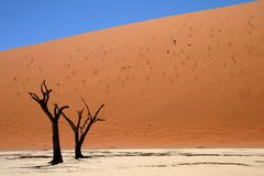 Dead acacia trees at Dead Vlei, Namib desert Royalty Free Stock Photo