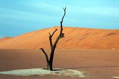 Dead acacia trees in desert. Dead Vlei, Namibia stock photo