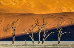 Dead acacia Trees and red dunes in Deadvlei. Sossusvlei. stock image