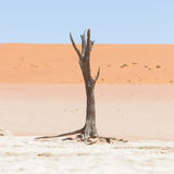 Dead acacia trees and red dunes of Namib desert Stock Image