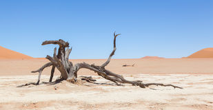 Dead acacia trees and red dunes of Namib desert Stock Photography