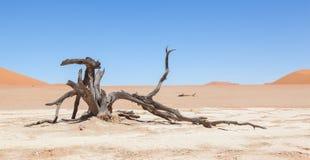 Dead acacia trees and red dunes of Namib desert. Deadvlei (Sossusvlei), Namibia stock photography