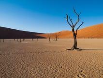 Dead acacia trees and red dunes of Namib desert. (Namib Naukluft National Park, Namibia royalty free stock images