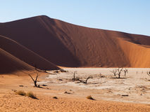 Dead acacia trees and red dunes of Namib desert. (Namib Naukluft National Park, Namibia royalty free stock photos