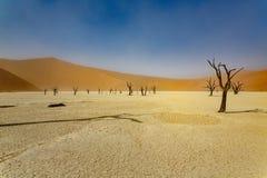 Dead Acacia trees in Sossusvlei, Namib desert. Dead Acacia trees under sandstorm in Sossusvlei, Namib desert stock photography