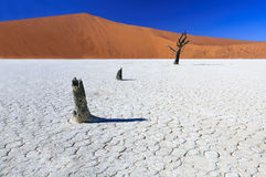 Dead acacia trees in Sossusvlei Pan, Namibia. Sossusvlei (sometimes written Sossus Vlei) is a salt and clay pan surrounded by high red dunes, located in the Stock Image