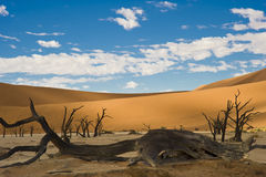 Sossusvlei - Namibia - dead Acacia. Dead vlei in the Sossusvlei desert in Namibia stock photo