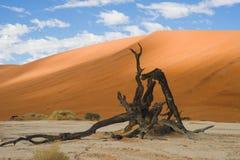 Dead Acacia, orange dunes - Sossusvlei - Namibia Stock Images