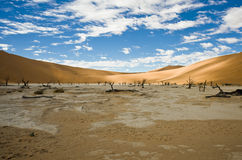Dead Acacias in the Vlei - Sossusvlei - Namibia Stock Photos