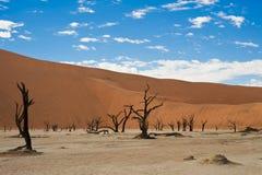 Dead Acacias in the Vlei - Sossusvlei - Namibia. Dead vlei in the Sossusvlei desert in Namibia stock photography