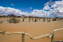 Dead Acacias in the Vlei - Sossusvlei - Namibia. Dead vlei near by the Sossusvlei desert in Namibia stock photography