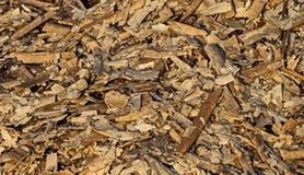 Dead algae carpet Stock Image