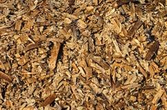 Dead algae carpet Stock Images