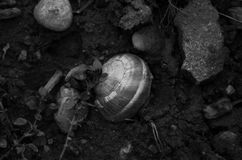 Dead or alive?. The shell of a snail stuck in the ground Stock Photos