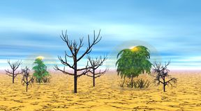 Dead and alive trees in the desert. Dead trees next to alive ones protected by a bubble, in the dry desert with blue sky with little clouds Stock Photo