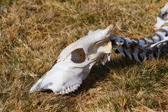 Dead animal Royalty Free Stock Photos