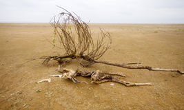 Dead animal among sand and  drought Stock Photo