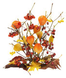 Dead autumn berries, leaves and branches Royalty Free Stock Photos