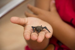 Dead Bat. On A Girl's Palm Royalty Free Stock Image