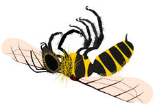 Dead bee Stock Photography