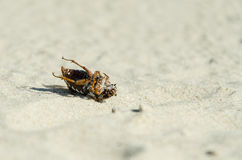 Dead beetle. On the beach Stock Photos