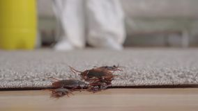 Dead beetles falling from top to floor from behind pest control doing handling slow mo