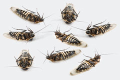 Group of dead beetles. On a white studio background Stock Photos