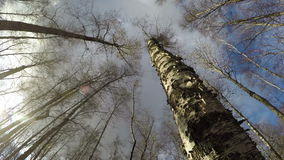 Dead birch tree in forest, time lapse 4K. Dead birch tree shot from beneath in the forest and  autumn clouds motion, time lapse 4K stock footage