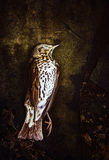 Dead bird, death concept Royalty Free Stock Images