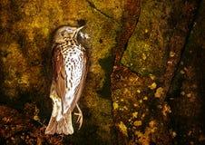 Dead bird Stock Photos