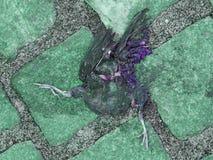 Dead bird Stock Images