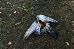 Dead bird on the dirt Stock Photo