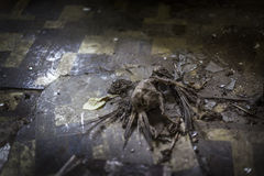 Dead bird skeleton with broken glass on dilapidated tiled floor Royalty Free Stock Photography