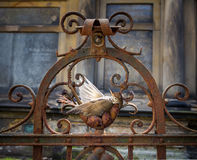 Dead bird, Thrush. Dead bird in a rusted fence on a cemetery Stock Photography