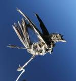 Dead bird, very  bad sign. Dead bird death from above Stock Photography