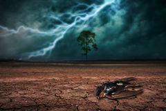 Dead birds on land to the ground dry cracked and big tree. Royalty Free Stock Photos