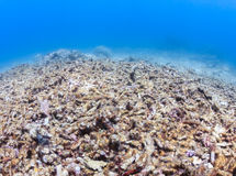 Dead, bleached coral reef Royalty Free Stock Photography