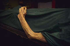 The dead body. Focus on hand decay Stock Photo