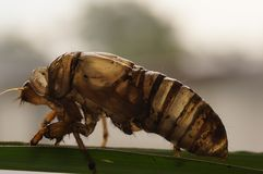 Dead body of insect. Insect dead body Stock Photo
