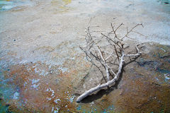 Dead branch on a acid ground Stock Photos