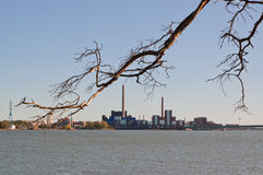 Dead branch and city. Dead tree branch and city line on background royalty free stock photo