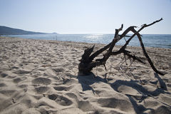 Dead branch on a deserted beach Stock Photography