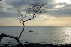 Dead Branch - Kona. Silhouette of a dead branch on the Kona Coast - Kona, Hawaii Royalty Free Stock Photos