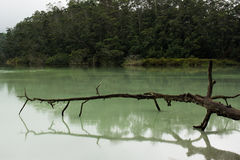 Dead branch over the green lake stock photo