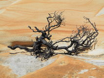 Dry branch in desolate land Royalty Free Stock Image