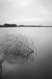 Dead-branch in tranquil lake. Dead branch in lake after sunset Royalty Free Stock Photography